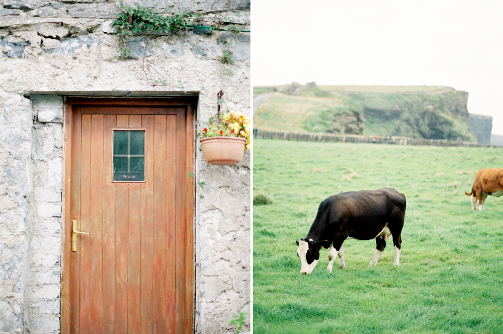 doorwithcows